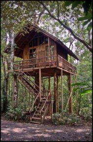ساخت خانه درختی