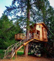 8 نمونه خانه درختی